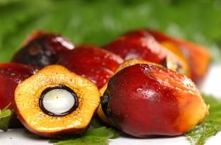 Интересни факти за палмовото масло